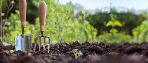 Agricultura sostenible campo