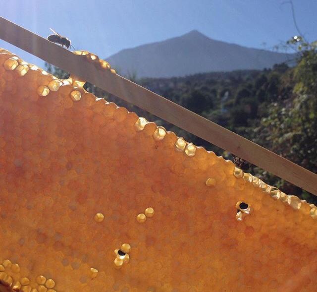 Colmenas y abejas Tenerife