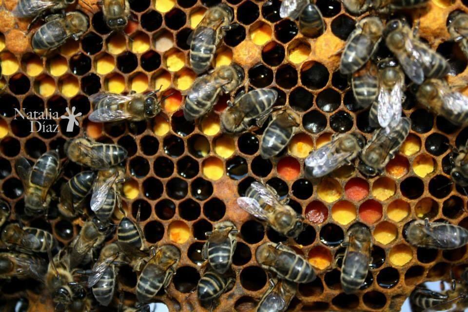 Colmena de abejas con panales de cera