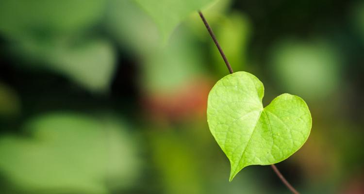 https://ecoalpispa.com/wp-content/uploads/2019/02/green-valentines-day-gifts1.jpg
