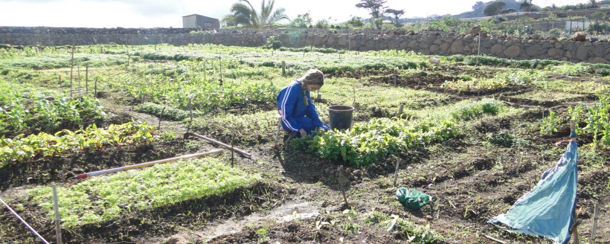 Mujer agricultora en el campo