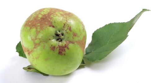Fruta poco apetecible a los ojos